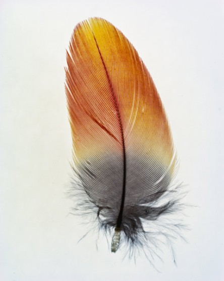taylormcurry-feathers-10